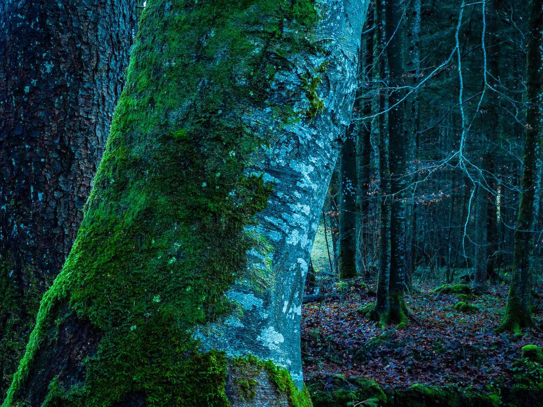 Bäume - Paul Pappitsch